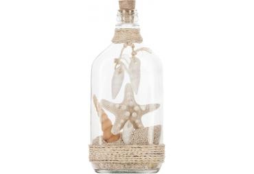 Shells in Bottle & Knobby Star