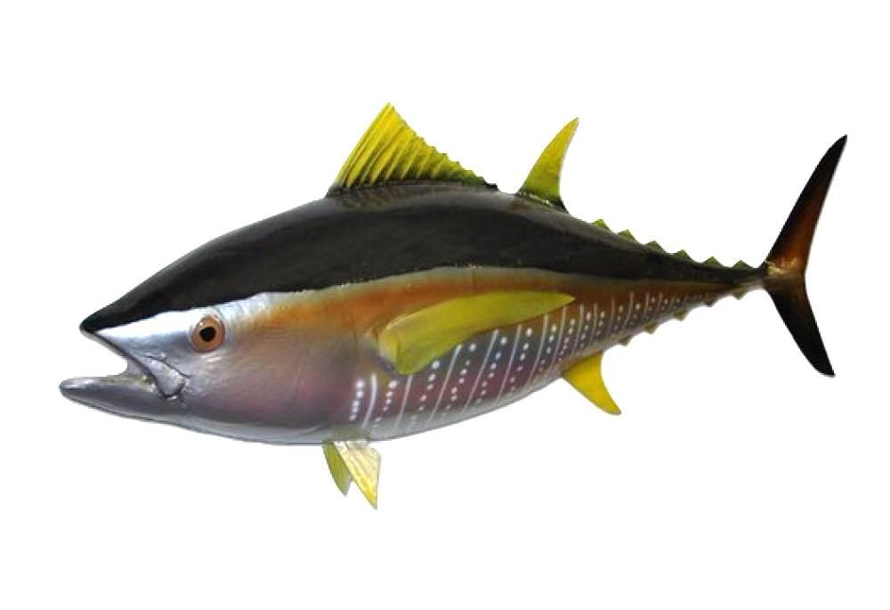 Yellowfin tuna fish replica for Ahi tuna fish