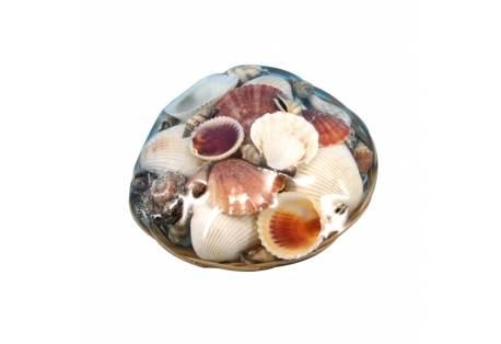 """Decorative Basket Of Large Seashells 6"""""""