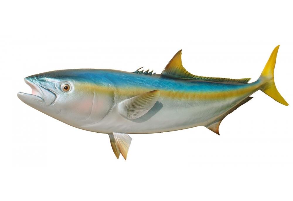 39-california-yellowtail-half-mount-fish