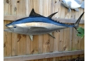 Bluefin Tuna Full Mount Fish Replica