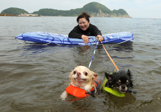 funny-water-swimming-dogs-woman1